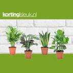 4 kamerplanten: van €59,95 voor €29,95